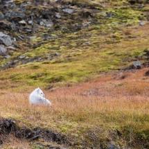 Svalbard September 2016