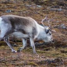 Svalbard September 2016-9